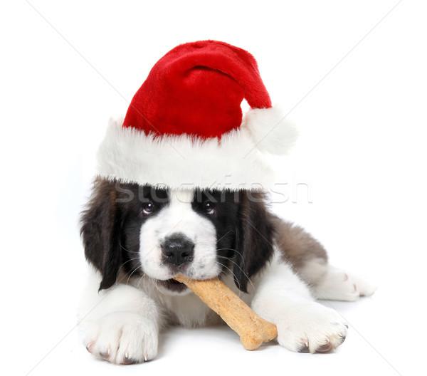 Adorable Santa Clause Saint Bernard Puppy Stock photo © tobkatrina