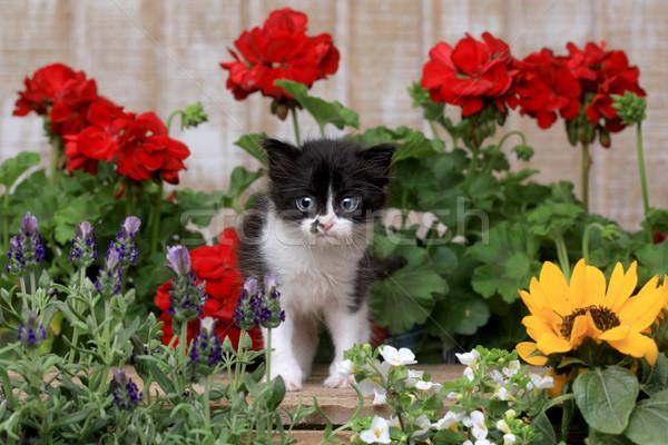 かわいい 古い 赤ちゃん 子猫 庭園 ストックフォト © tobkatrina