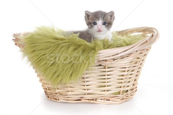 子猫 肖像 スタジオ 白 かわいい ストックフォト © tobkatrina