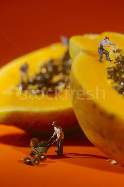 People Working on Papaya Fruit Stock photo © tobkatrina