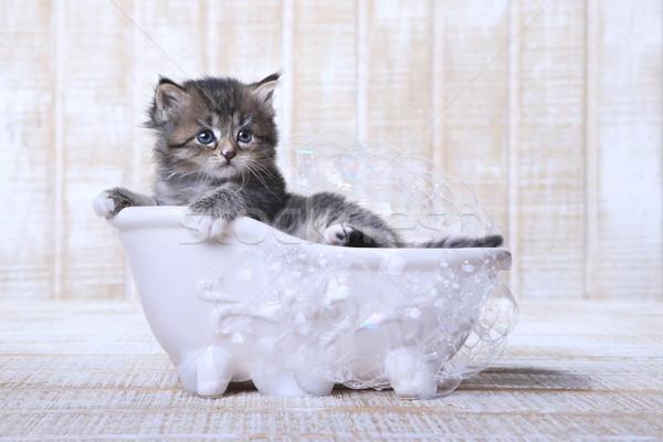 Tiny Kitten in a Bathtub With Bubbles  Stock photo © tobkatrina