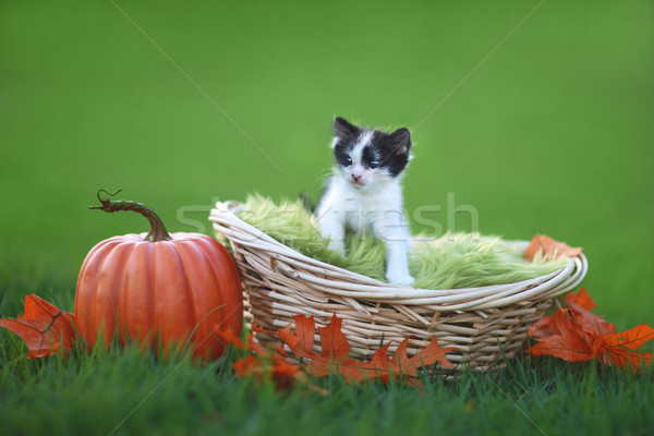Stock photo:  Baby Kitten Outdoors in Grass