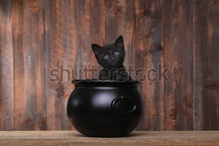 прелестный котенка Хэллоуин котел древесины Cute Сток-фото © tobkatrina