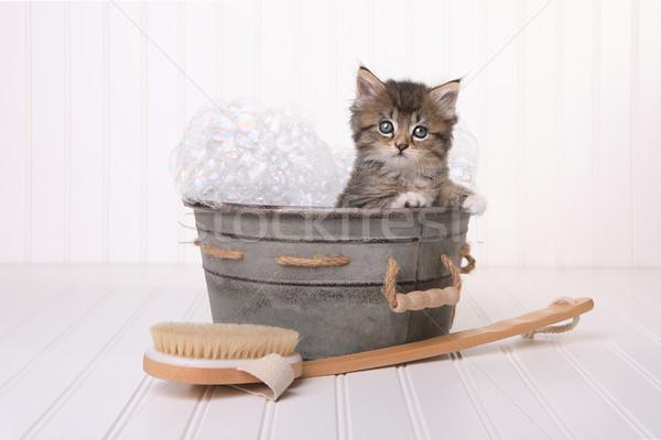 Cute Kitten in Washtub Getting Groomed By Bubble Bath Stock photo © tobkatrina