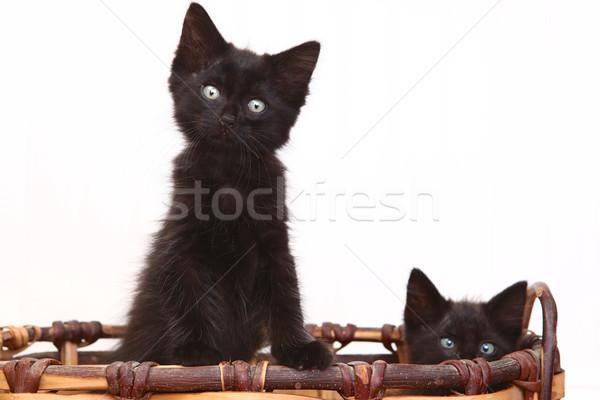好奇心の強い 子猫 バスケット 白 愛らしい ストックフォト © tobkatrina