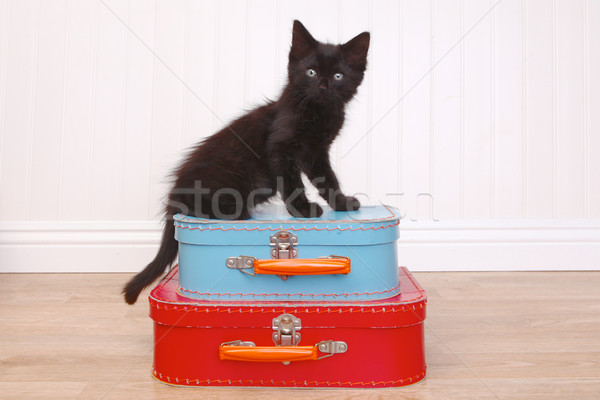 Black Kitten Sitting Atop Luggage on White Stock photo © tobkatrina