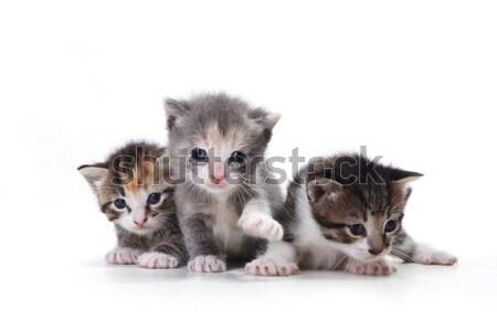 Adorable Newborn Kittens on a White Background Stock photo © tobkatrina