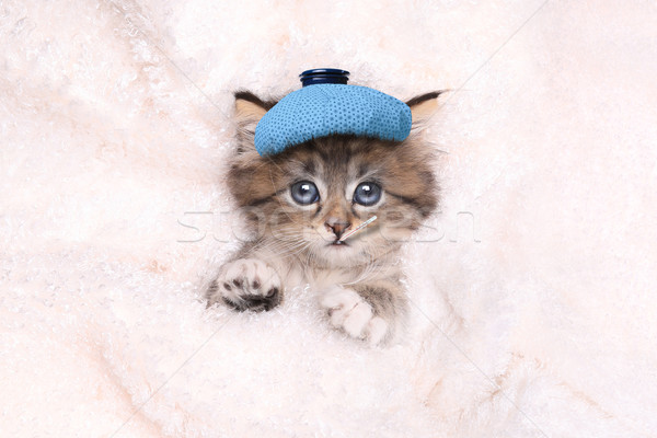Sick Kitten With Ice Bag and Thermometer  Stock photo © tobkatrina