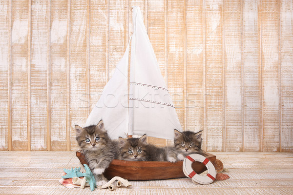 Cute Kittens in a Sailboat With Ocean Theme Stock photo © tobkatrina