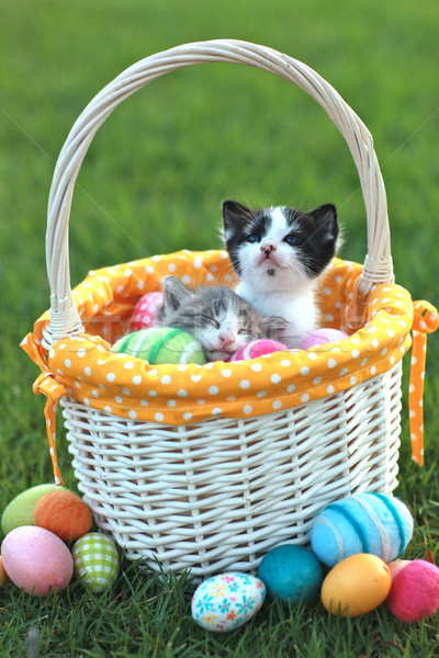 Adorable Kittens in a Holiday Easter Basket Stock photo © tobkatrina