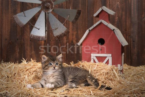 Bonitinho gatinho celeiro palha adorável bebê Foto stock © tobkatrina