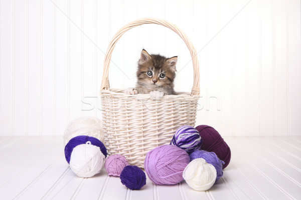 Cute Kitten in a Basket With Yarn on White Stock photo © tobkatrina