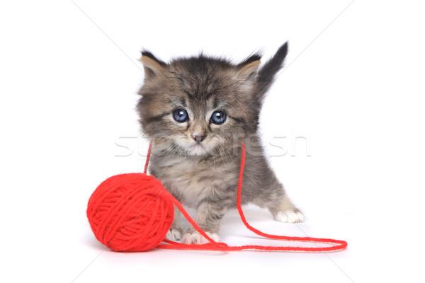 Pici kiscica játszik piros labda Manhattan Stock fotó © tobkatrina