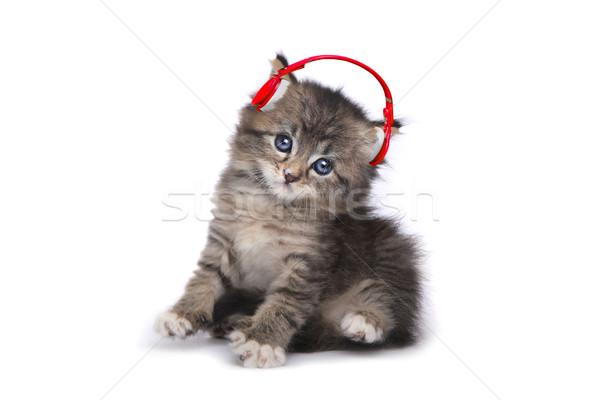 Kitten on a White Background Listening to Music Stock photo © tobkatrina