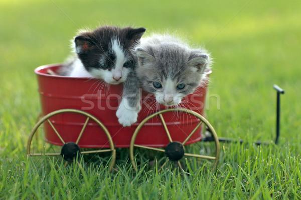 Kittens buitenshuis natuurlijk licht cute weinig groene Stockfoto © tobkatrina