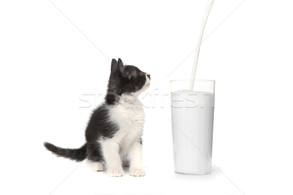 Cute Kitten Watching Milk Pour Into a Glass Stock photo © tobkatrina