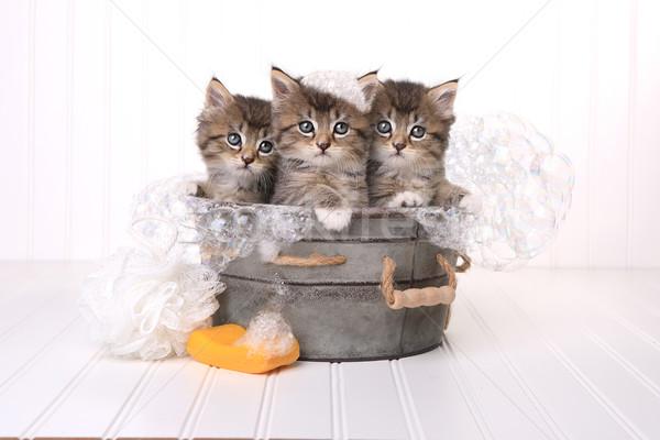 Cute Kittens in Washtub Getting Groomed By Bubble Bath Stock photo © tobkatrina