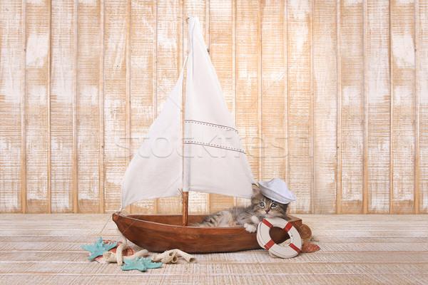 Cute Kitten in a Sailboat With Ocean Theme Stock photo © tobkatrina