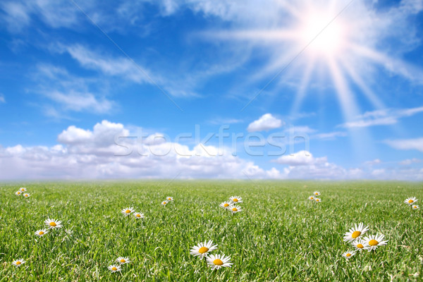 Serene Sunny Field Meadow in Spring  Stock photo © tobkatrina