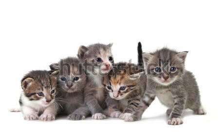 Cute Newborn Baby Kittens Easily Isolated on White Stock photo © tobkatrina