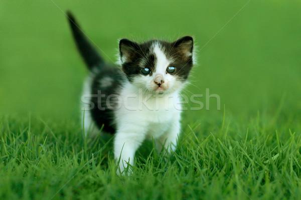 Piccolo gattino esterna la luce naturale cute verde Foto d'archivio © tobkatrina