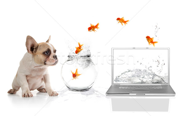 Cute Puppy Watching Goldfish Escaping the Virtual World Stock photo © tobkatrina