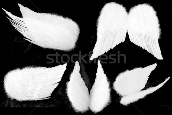 Muitos guardião asas de anjo isolado preto branco Foto stock © tobkatrina