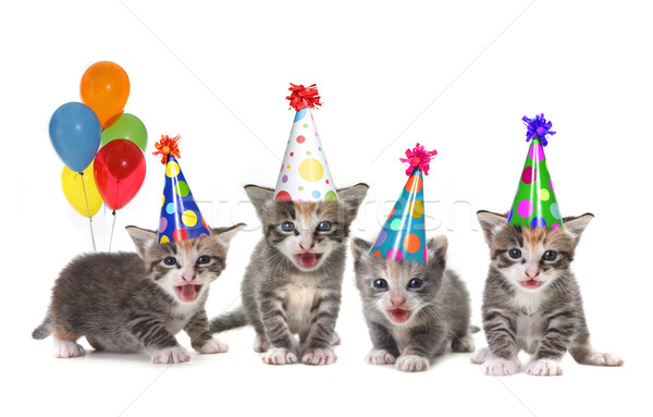 Birthday Song Singing Kittens on White Background Stock photo © tobkatrina