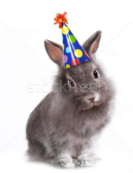 バニー ウサギ 着用 歳の誕生日 帽子 面白い ストックフォト © tobkatrina