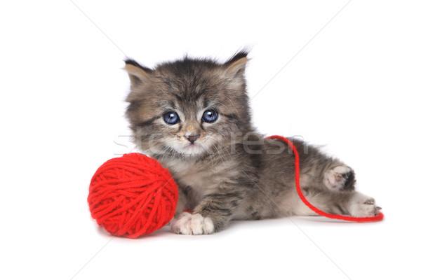Playful Kitten With Red Ball of Yarn Stock photo © tobkatrina