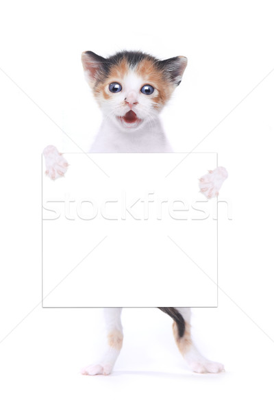 Baby Calico Kitten With Surprise Expression On White Background Stock photo © tobkatrina