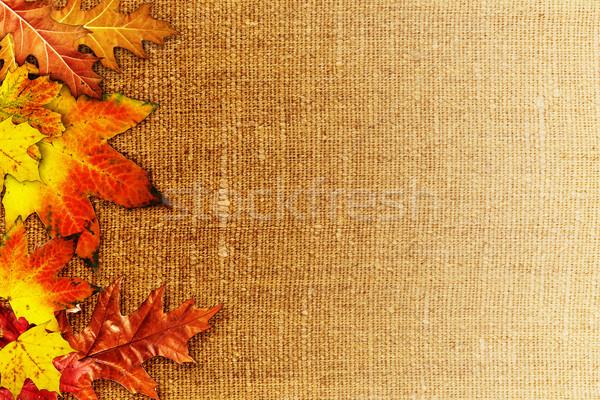Fallen foliage over old hessian fabric, abstract autumn backgrou Stock photo © tolokonov