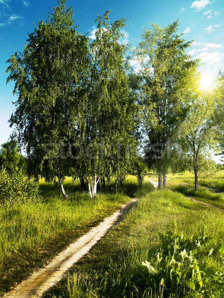 Verão tempo verde parque naturalismo fundos Foto stock © tolokonov