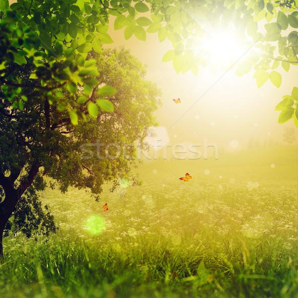 Magia forestales resumen ambiental fondos diseno Foto stock © tolokonov