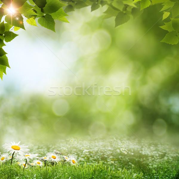 Bellezza naturale sfondi design cielo fiore Foto d'archivio © tolokonov