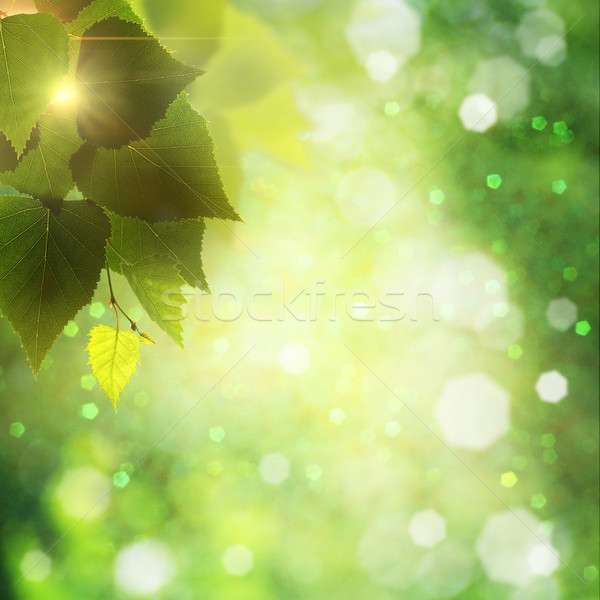 Foliage. Abstract natural backgrounds with lens flare and beauty Stock photo © tolokonov
