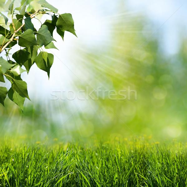 Nap nyaláb absztrakt tavasz nyár hátterek Stock fotó © tolokonov