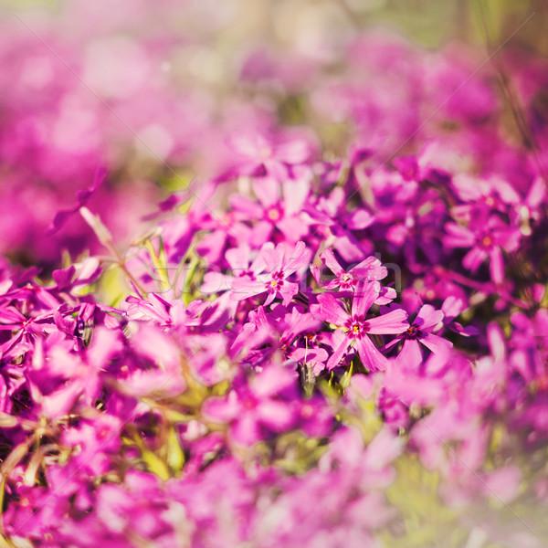 Sucio floral fondos superficial enfoque flor Foto stock © tolokonov