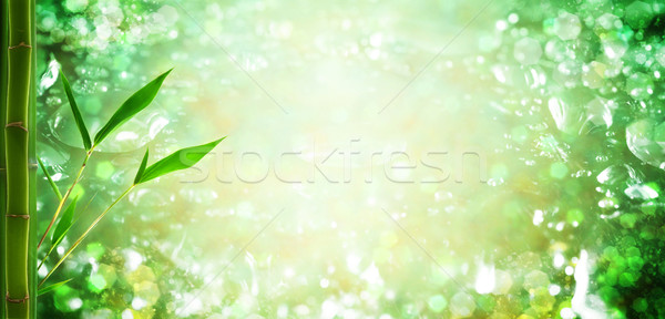 water droplets and bamboo. natural backgrounds Stock photo © tolokonov