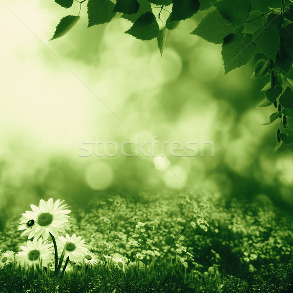 Smokey summer day on the meadow, abstract natural landscape Stock photo © tolokonov