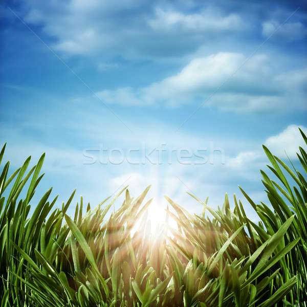 Sunrise on the meadow. Abstract natural backgrounds Stock photo © tolokonov