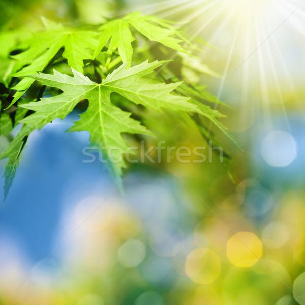Resumen naturales fondos belleza bokeh verano Foto stock © tolokonov