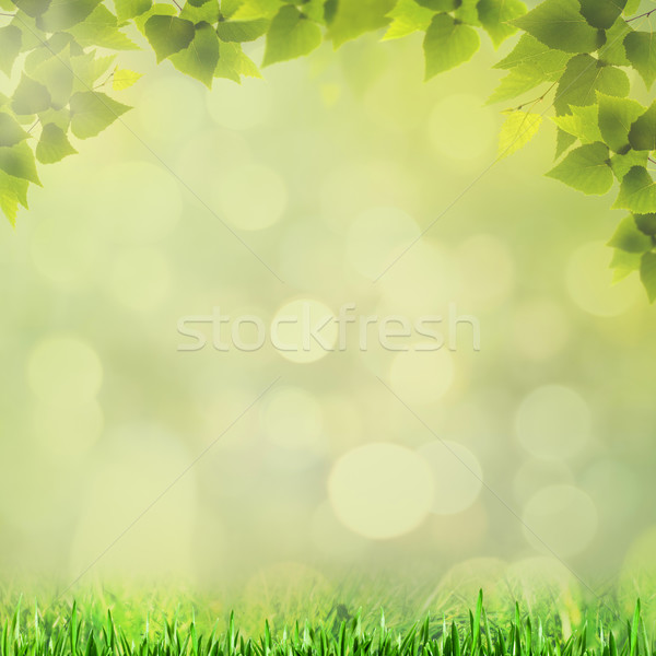 Stock photo: Abstract natural backgrounds with beauty bokeh for your design