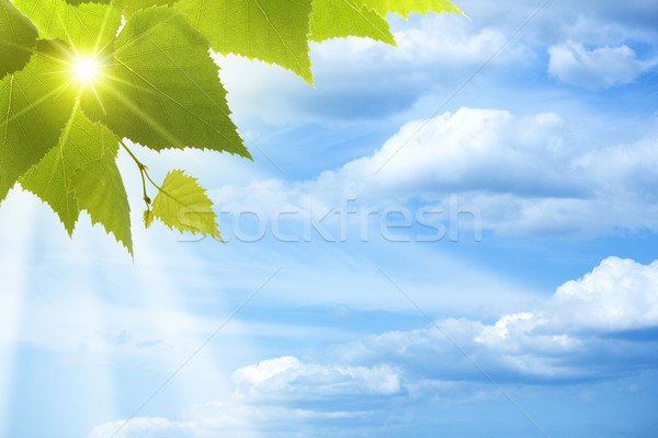 Abstract natural backgrounds against blue skies Stock photo © tolokonov