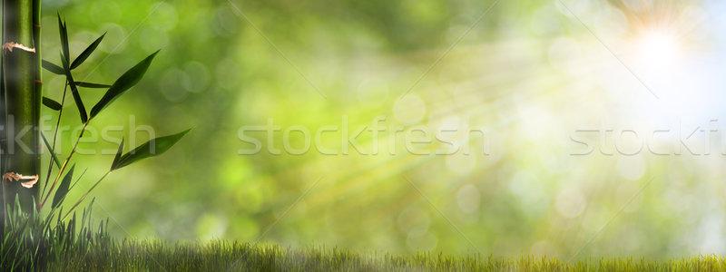 Abstract misty naturale sfondi bambù fogliame Foto d'archivio © tolokonov