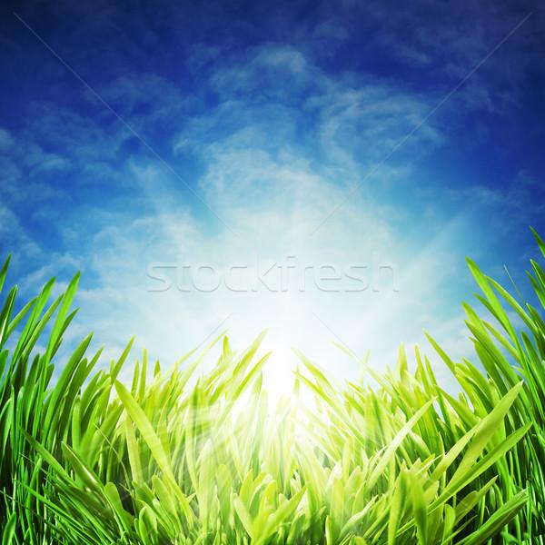 Resumen naturales fondos azul cielo hierba Foto stock © tolokonov