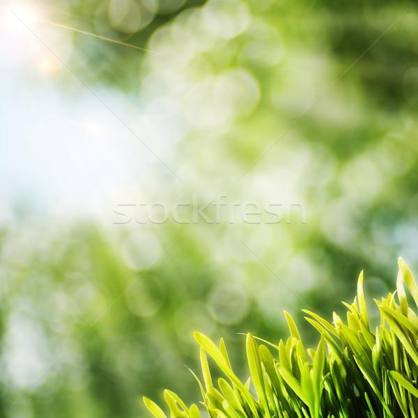 夏 自然 背景 太陽 ビーム 緑の草 ストックフォト © tolokonov