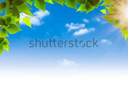 Blue skies. Abstract natural backgrounds for your design Stock photo © tolokonov