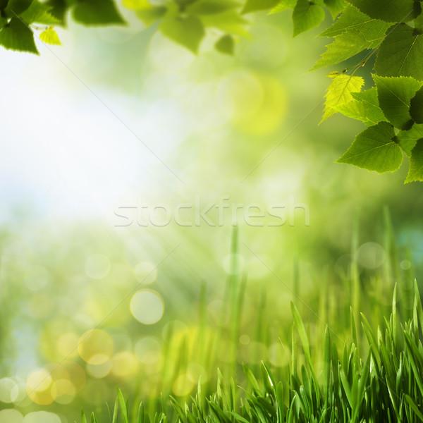 Belleza forestales fondos diseno cielo árbol Foto stock © tolokonov