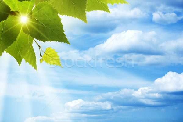 Happy morning. Abstract natural backgrounds against blue skies Stock photo © tolokonov